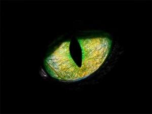 panter-ogen